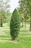 Espaliers tree Stock Photo