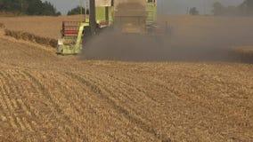 Espane a elevação da parte traseira do campo de milho maduro do cereal da colheita mecanizada da ceifeira na temporada de verão 4 filme