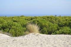 Espanha de Cadiz da praia de Bolonia Imagens de Stock