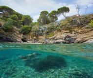 Espanha mediterrânea subaquática dos peixes rochosos da costa foto de stock