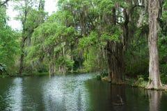 Espanhol Moss Swamp Foto de Stock Royalty Free
