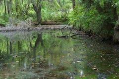 Espanhol Moss Swamp Imagem de Stock Royalty Free