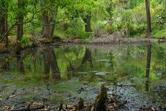 Espanhol Moss Swamp Foto de Stock