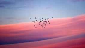 Espansione degli uccelli Fotografia Stock Libera da Diritti