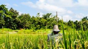 Espantalho no fundo do campo do arroz da floresta e do céu Fotografia de Stock Royalty Free