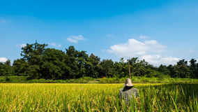 Espantalho no fundo do campo do arroz da floresta e do céu Fotografia de Stock