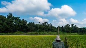 Espantalho no fundo do campo do arroz da floresta e do céu Fotos de Stock Royalty Free