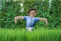 Espantalho tailandês no campo do arroz Imagens de Stock