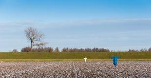 Espantalhos no campo semeado para desanimar os pássaros Fotografia de Stock Royalty Free