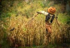 Espantapájaros de Halloween con la cabeza de la calabaza en un campo de maíz Foto de archivo