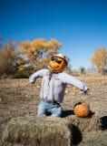 Espantapájaros de Halloween en el remiendo de la calabaza fotografía de archivo