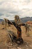 Espantapájaros de la yuca Foto de archivo