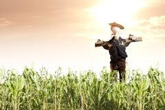 Espantapájaros en campo de maíz en la salida del sol Fotografía de archivo
