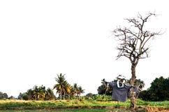 Espantapájaros en granja Fotografía de archivo libre de regalías