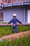 Espantapájaros en la plantación del arroz Fotografía de archivo libre de regalías