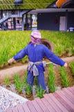 Espantapájaros en la plantación del arroz Imagen de archivo libre de regalías