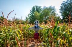 Espantapájaros viejo en un campo de maíz, hecho paja de la forma Imagen de archivo libre de regalías