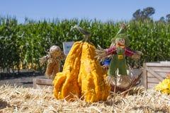 Espantapájaros y calabaza decorativa con maíz verde azul y el cielo azul de par en par Fotos de archivo