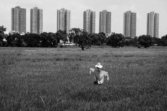 Espantapájaros en campo del arroz Imágenes de archivo libres de regalías