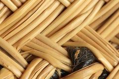 Esparto braid handmade Stock Image