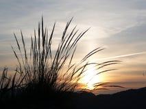 Esparto grass at dawn Stock Images