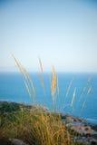 Esparto reeds. Endemic  Mediterranean coastal flora Stock Photo
