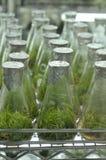 Especímenes cada vez mayor de la planta en el laboratorio Foto de archivo