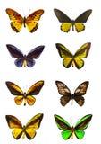 Especímenes de la mariposa fotografía de archivo libre de regalías