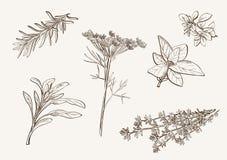 Especia de la hierba Fotos de archivo