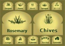 Especia de las hierbas de las escrituras de la etiqueta Imagen de archivo