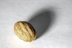 Especia de Nutmag imagen de archivo