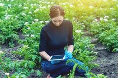 Especialista del agrónomo de la mujer en el campo de granja usando una tableta Concepto de control de calidad en la producción imágenes de archivo libres de regalías