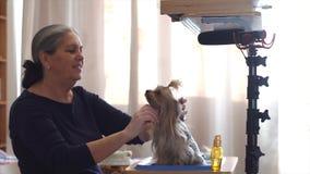 Especialista del perro que hace vlogging usando el micrófono y la cámara almacen de video