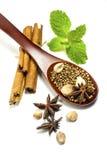 A especiaria na colher com hortelã verde Imagens de Stock Royalty Free