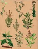 A especiaria planta especiarias fotografia de stock royalty free