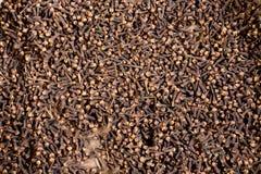 Especiaria recentemente tingida do cravo-da-índia Fotografia de Stock Royalty Free