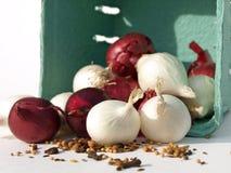 Especiarias com a cebola vermelha e branca Fotos de Stock