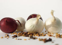 Especiarias com a cebola vermelha e branca Imagens de Stock