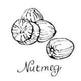 Especiarias da cozinha nutmeg Ilustração desenhada mão do vetor Imagens de Stock