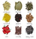 Especiarias diferentes ajustadas Fotografia de Stock