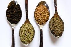 Especiarias e condimentos Imagem de Stock