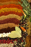 Especiarias e ervas imagem de stock
