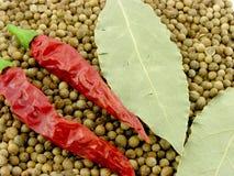 Especiarias. Pimenta e louros. Imagens de Stock