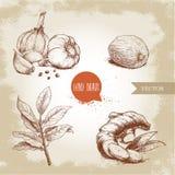 Especiarias tiradas mão do esboço ajustadas A composição com as sementes da pimenta preta, raiz do alho do gengibre, folhas de lo Imagens de Stock