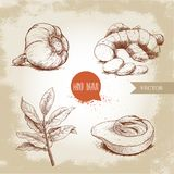 Especiarias tiradas mão do esboço ajustadas O alho, raiz do gengibre com cortes, folhas de louro ramifica e fruto dos macis da no Fotos de Stock