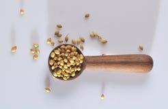 Especias del coriandro en cuchara de madera Imagenes de archivo