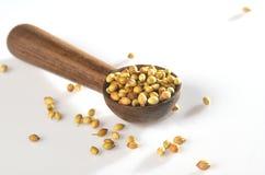 Especias del coriandro en cuchara de madera Fotografía de archivo libre de regalías