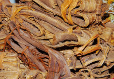 Especias del palillo de cinamomo fotografía de archivo