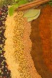 Especias e hierbas foto de archivo