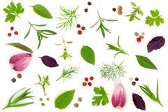Especias e hierbas frescas en el fondo blanco Ajo de los granos de pimienta del tartun del tomillo de albahaca del perejil del en Fotos de archivo